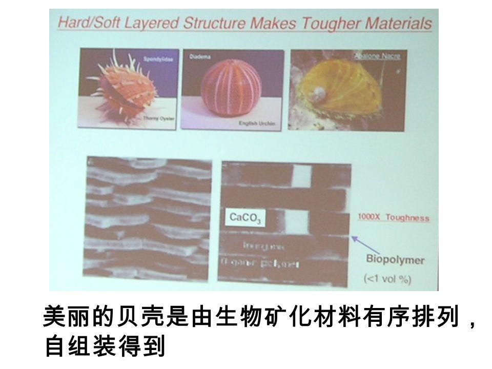 美丽的贝壳是由生物矿化材料有序排列, 自组装得到