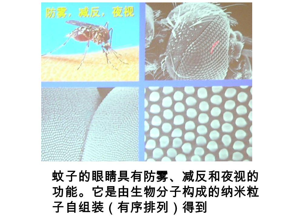 蚊子的眼睛具有防雾、减反和夜视的 功能。它是由生物分子构成的纳米粒 子自组装(有序排列)得到