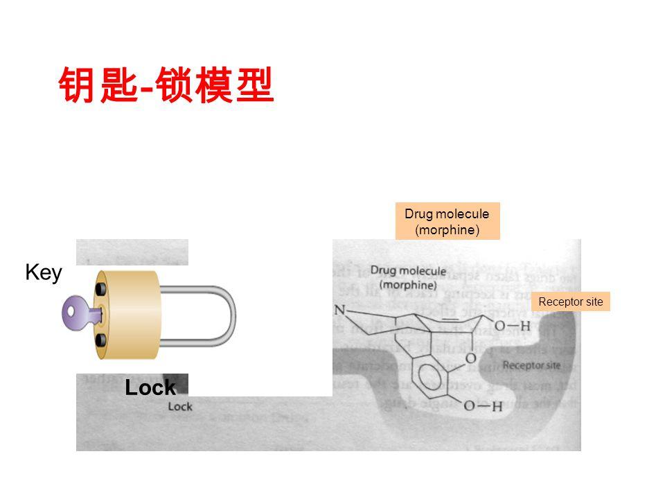 钥匙 - 锁模型 Drug molecule (morphine) Receptor site Lock Key