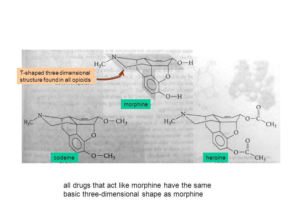 all drugs that act like morphine have the same basic three-dimensional shape as morphine T-shaped three dimensional structure found in all opioids morphine codeineheroine