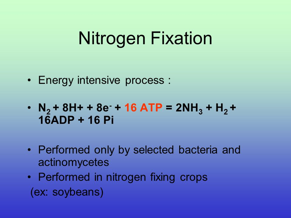 Nitrogen Fixation R-NH 2 NH 4 NO 2 NO 3 NO 2 NO N2ON2O N2N2