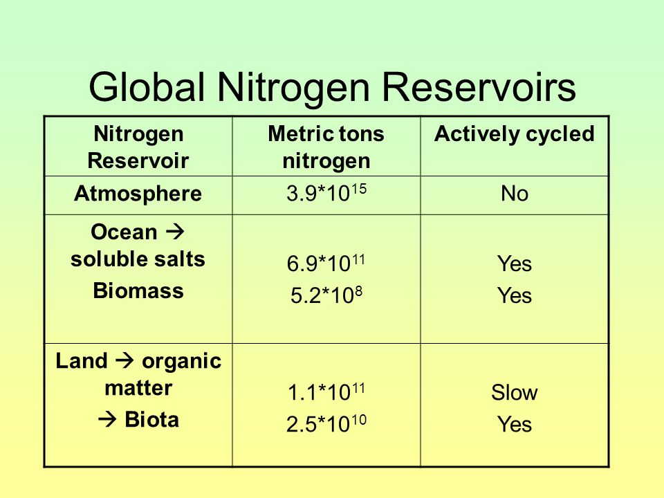 Global Nitrogen Reservoirs Nitrogen Reservoir Metric tons nitrogen Actively cycled Atmosphere3.9*10 15 No Ocean  soluble salts Biomass 6.9*10 11 5.2*10 8 Yes Land  organic matter  Biota 1.1*10 11 2.5*10 10 Slow Yes