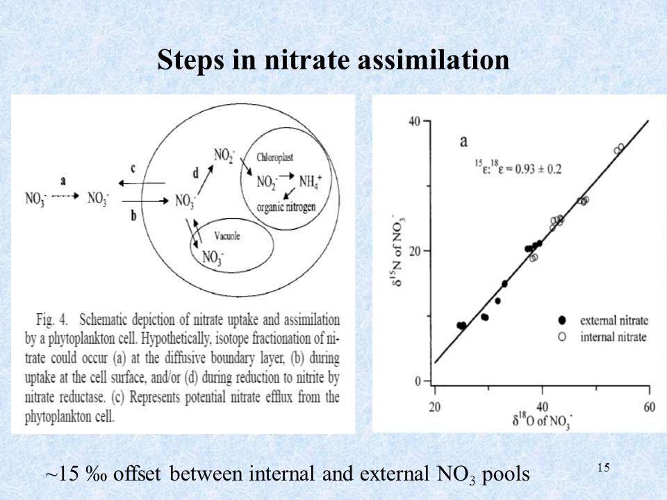 15 Steps in nitrate assimilation ~15 ‰ offset between internal and external NO 3 pools