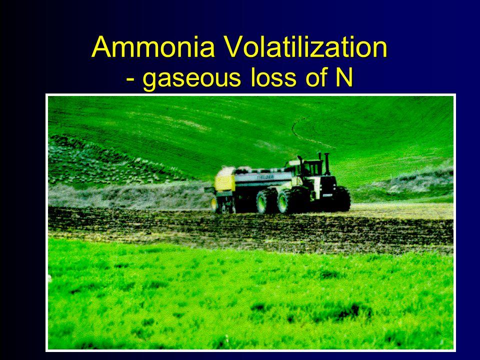 Ammonia Volatilization - gaseous loss of N