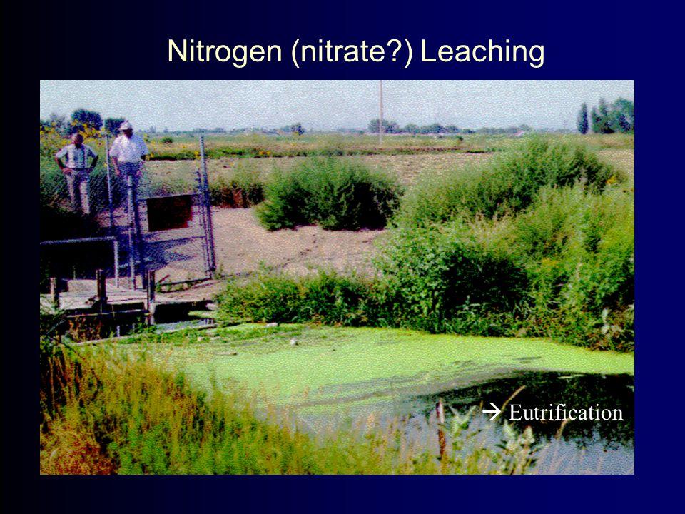 Nitrogen (nitrate?) Leaching  Eutrification