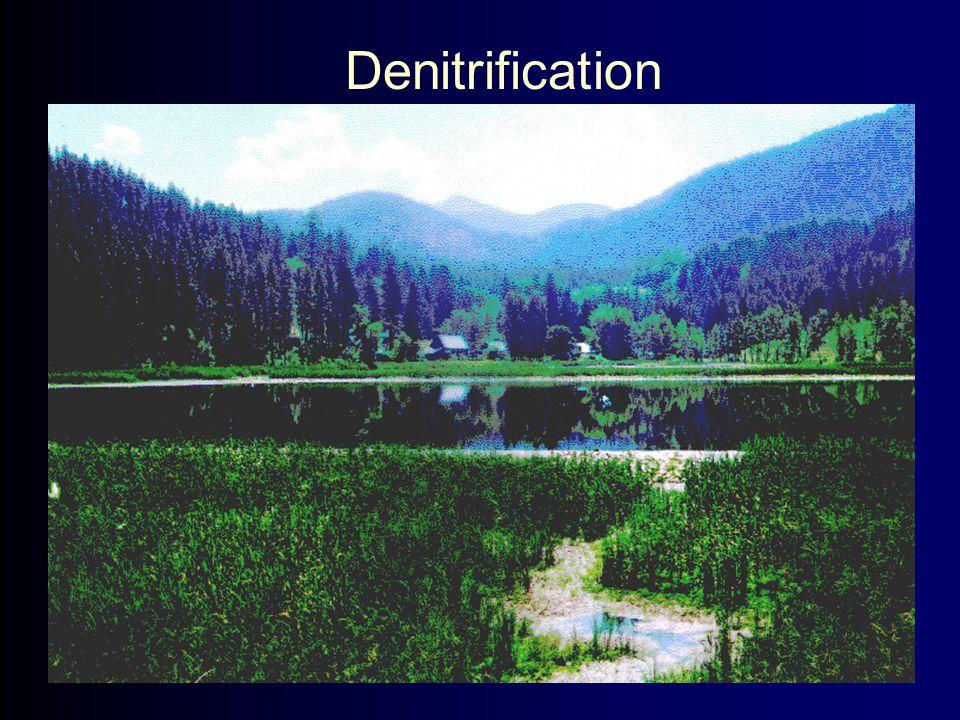 Denitrification