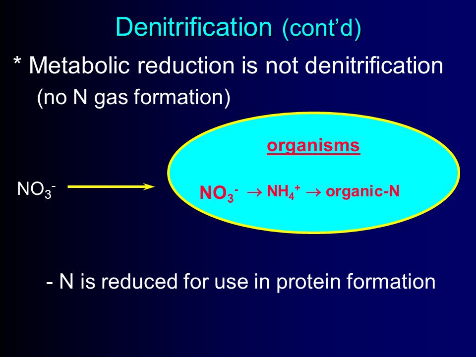 Denitrification (cont'd) * Metabolic reduction is not denitrification (no N gas formation) NO 3 - organisms NO 3 -  NH 4 +  organic-N - N is reduced for use in protein formation