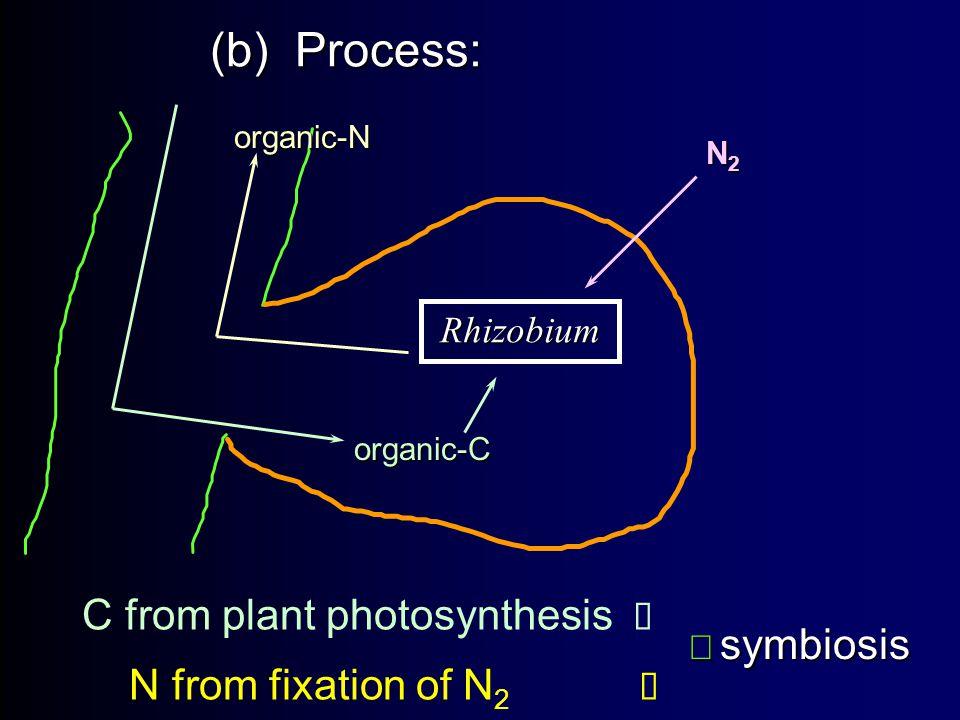(b) Process: C from plant photosynthesis  N from fixation of N 2   symbiosis   symbiosis Rhizobium organic-C N2N2N2N2 organic-N