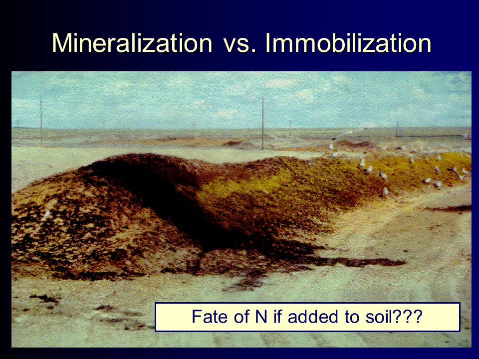 Mineralization vs. Immobilization Fate of N if added to soil