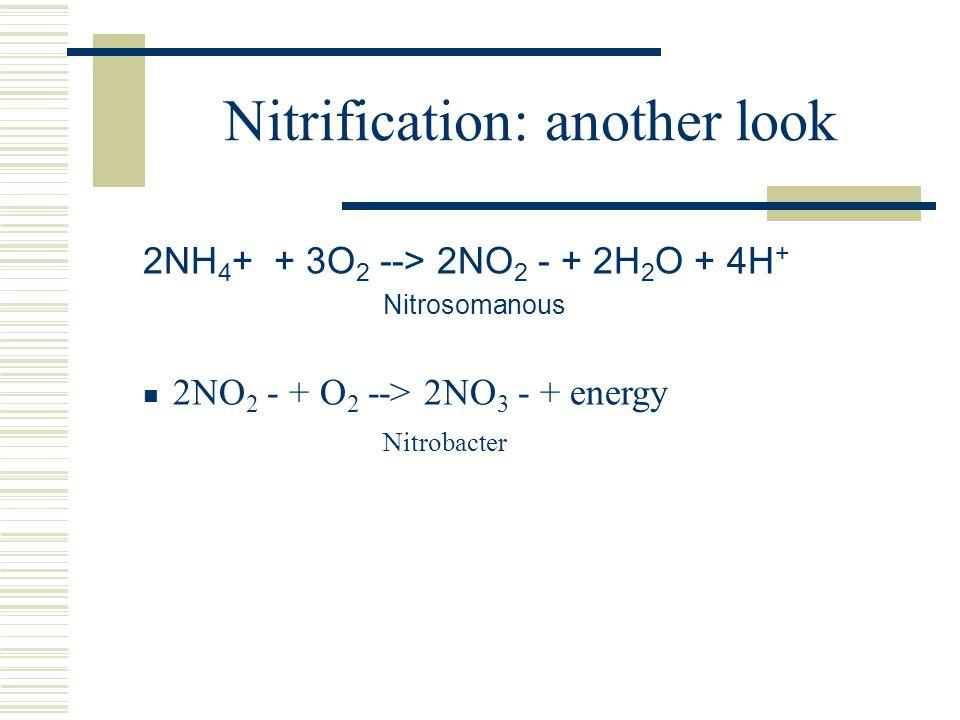 Nitrification: another look 2NH 4 + + 3O 2 --> 2NO 2 - + 2H 2 O + 4H + Nitrosomanous 2NO 2 - + O 2 --> 2NO 3 - + energy Nitrobacter