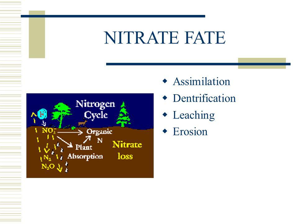 NITRATE FATE  Assimilation  Dentrification  Leaching  Erosion