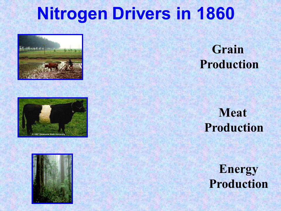 Nitrogen Drivers in 1860 Grain Production Meat Production Energy Production