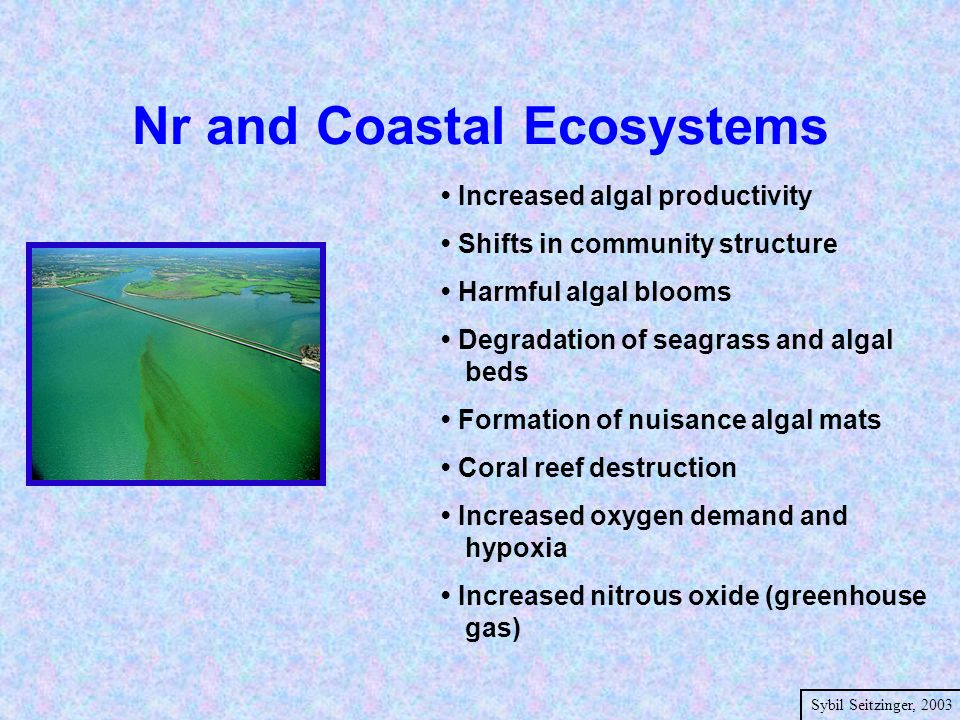 Nr and Coastal Ecosystems Increased algal productivity Shifts in community structure Harmful algal blooms Degradation of seagrass and algal beds Formation of nuisance algal mats Coral reef destruction Increased oxygen demand and hypoxia Increased nitrous oxide (greenhouse gas) Sybil Seitzinger, 2003