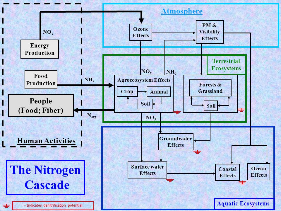 Atmosphere Terrestrial Ecosystems Aquatic Ecosystems Human Activities Groundwater Effects Surface water Effects Coastal Effects Stratospheric Effects Energy Production PM & Visibility Effects Ozone Effects Agroecosystem Effects NH x Food Production NO x Crop Animal People (Food; Fiber) Soil NO 3 The Nitrogen Cascade NH 3 --Indicates denitrification potential N org Forests & Grassland Soil Ocean Effects N2ON2O GH Effects N2ON2O