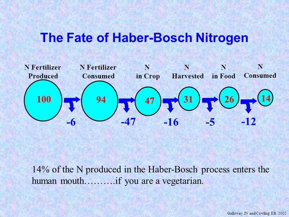 N Fertilizer Produced N Fertilizer Applied N in Crop N In Feed N in Store N Consumed -6 -47 -3 100 4 47 94 7 31 -24 The Fate of Haber-Bosch Nitrogen -16 4% of the N produced in the Haber-Bosch process and used for animal production enters the human mouth.