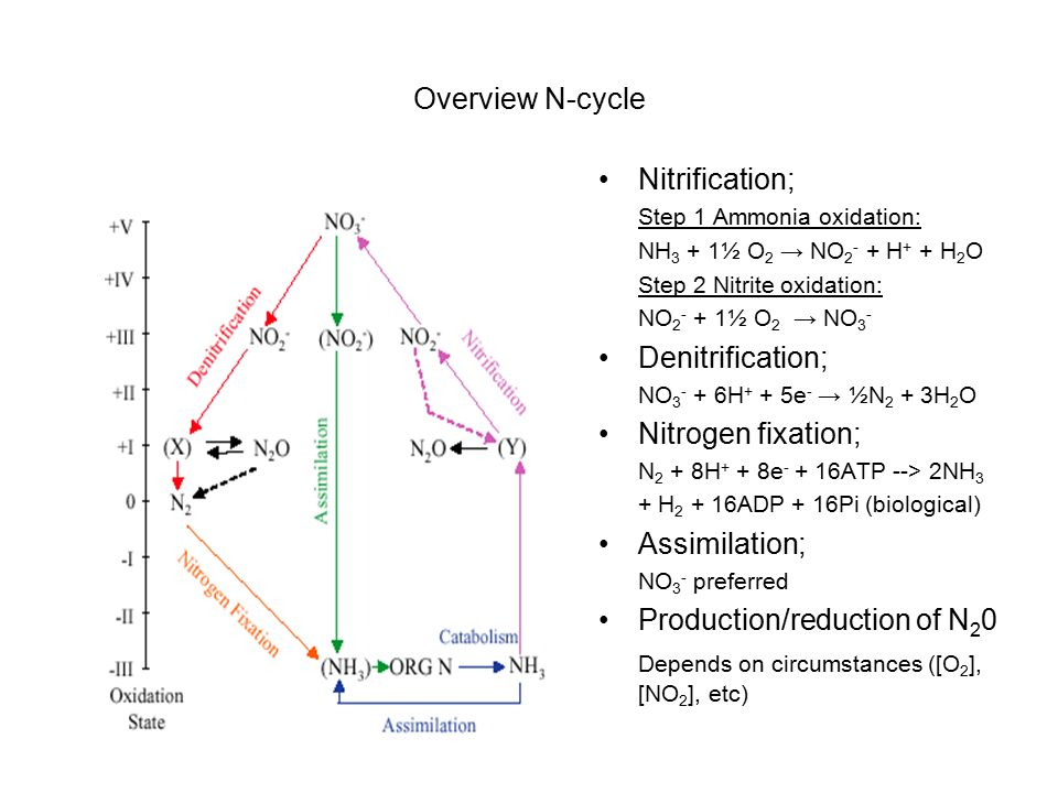Overview N-cycle Nitrification; Step 1 Ammonia oxidation: NH 3 + 1½ O 2 → NO 2 - + H + + H 2 O Step 2 Nitrite oxidation: NO 2 - + 1½ O 2 → NO 3 - Denitrification; NO 3 - + 6H + + 5e - → ½N 2 + 3H 2 O Nitrogen fixation; N 2 + 8H + + 8e - + 16ATP --> 2NH 3 + H 2 + 16ADP + 16Pi (biological) Assimilation; NO 3 - preferred Production/reduction of N 2 0 Depends on circumstances ([O 2 ], [NO 2 ], etc)