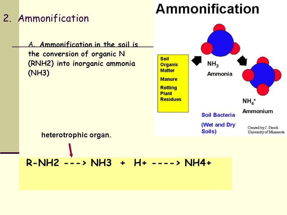 2. Ammonification A.