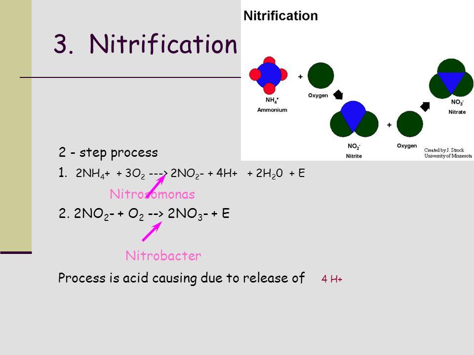 3. Nitrification 2 - step process 1. 2NH 4 + + 3O 2 ---> 2NO 2 - + 4H+ + 2H 2 0 + E Nitrosomonas 2. 2NO 2 - + O 2 --> 2NO 3 - + E Nitrobacter Process