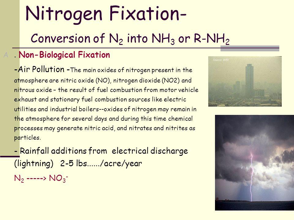 N2 R-NH2 NH4+ NO3-Plants N fixation Ammonification Nitrification Denitrification immobilization mineralization