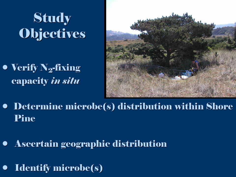 Study Objectives Verify N 2 -fixingVerify N 2 -fixing capacity in situ capacity in situ Determine microbe(s) distribution within Shore Determine microbe(s) distribution within Shore Pine Pine Ascertain geographic distribution Ascertain geographic distribution Identify microbe(s) Identify microbe(s)