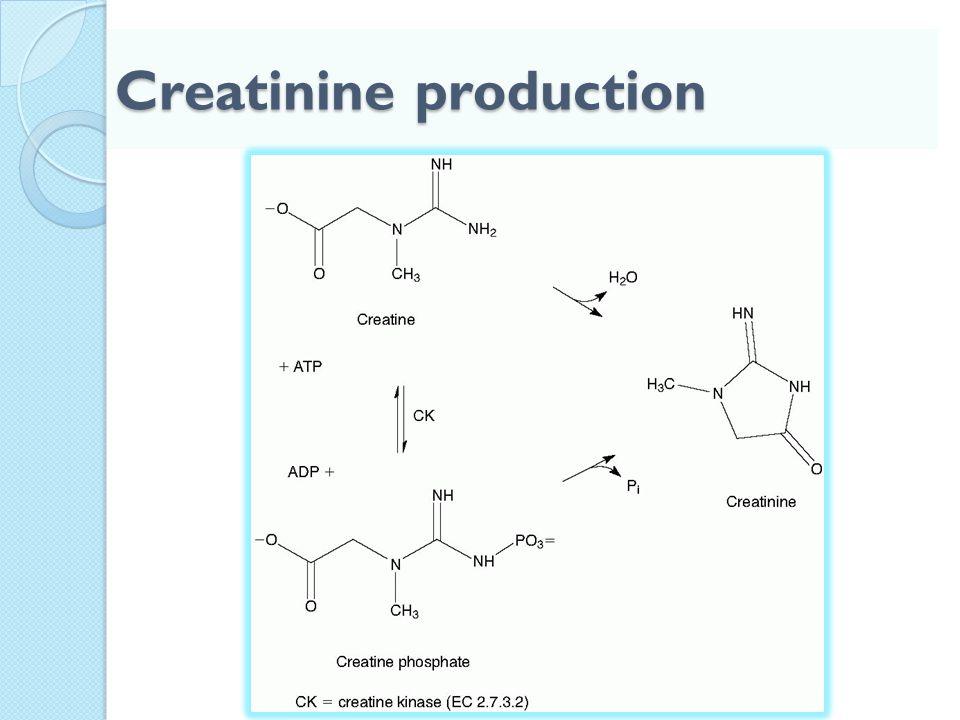 Creatinine production