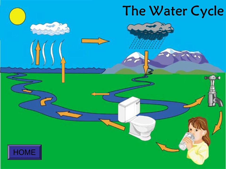 The Water Cycle HOME