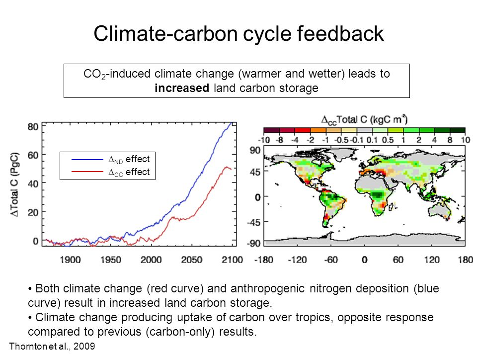 Climate-carbon cycle feedback CO 2 -induced climate change (warmer and wetter) leads to increased land carbon storage Both climate change (red curve) and anthropogenic nitrogen deposition (blue curve) result in increased land carbon storage.