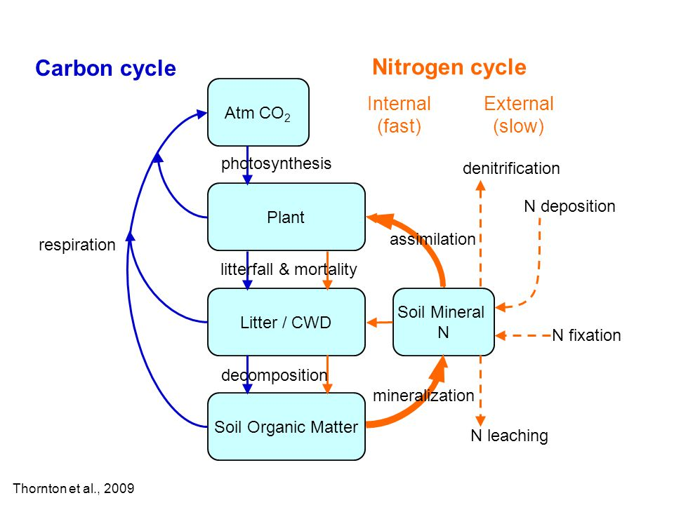 Atm CO 2 Plant Litter / CWD Soil Organic Matter Carbon cycle Soil Mineral N N deposition N fixation denitrification N leaching Nitrogen cycle respiration Internal (fast) External (slow) photosynthesis litterfall & mortality decomposition mineralization assimilation Thornton et al., 2009