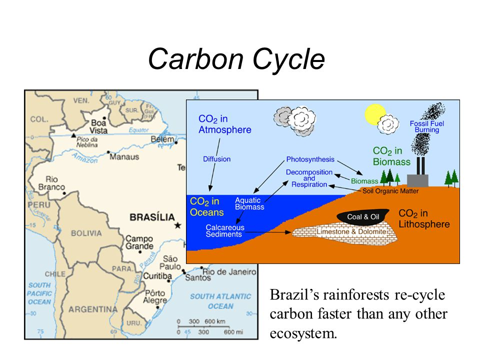 Carbon Cycle Today, the earth's atmosphere is accumulating CO 2 faster that it can be sequestered.