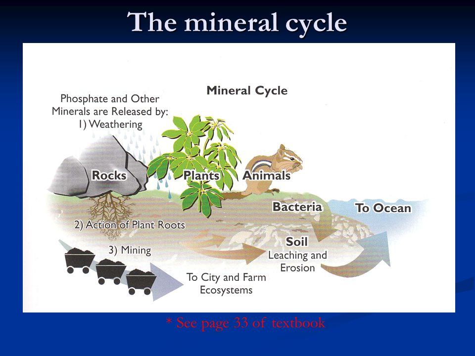 The mineral cycle * See page 33 of textbook