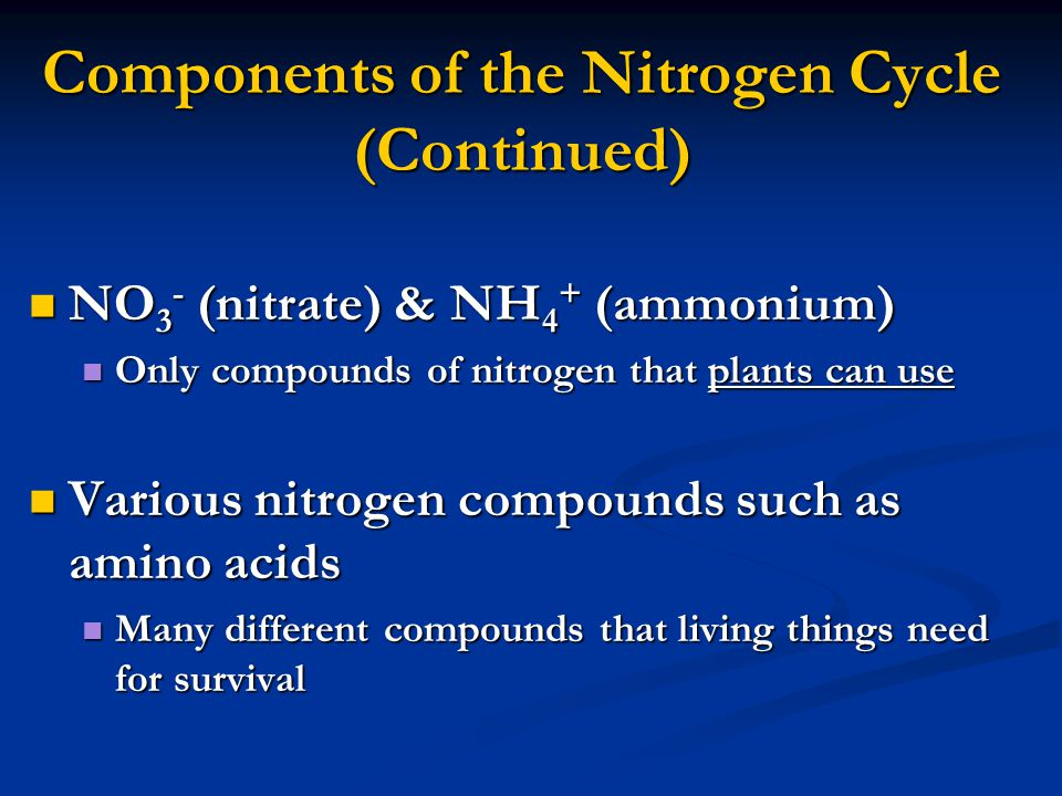 Components of the Nitrogen Cycle (Continued) NO 3 - (nitrate) & NH 4 + (ammonium) NO 3 - (nitrate) & NH 4 + (ammonium) Only compounds of nitrogen that plants can use Only compounds of nitrogen that plants can use Various nitrogen compounds such as amino acids Various nitrogen compounds such as amino acids Many different compounds that living things need for survival Many different compounds that living things need for survival