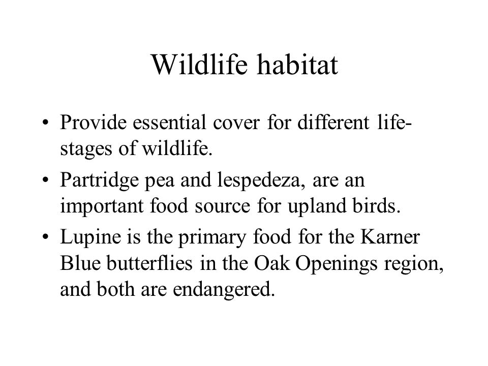 Wildlife habitat Provide essential cover for different life- stages of wildlife. Partridge pea and lespedeza, are an important food source for upland