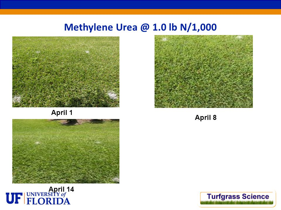 April 1 Methylene Urea @ 1.0 lb N/1,000 April 8 April 14