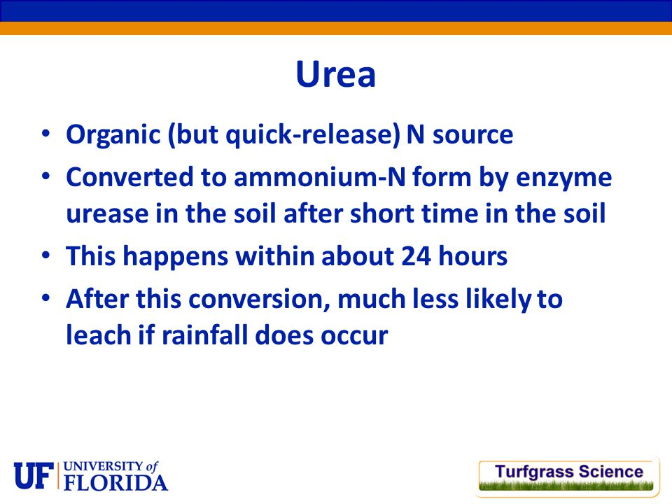 Urea Organic (but quick-release) N source Converted to ammonium-N form by enzyme urease in the soil after short time in the soil This happens within about 24 hours After this conversion, much less likely to leach if rainfall does occur