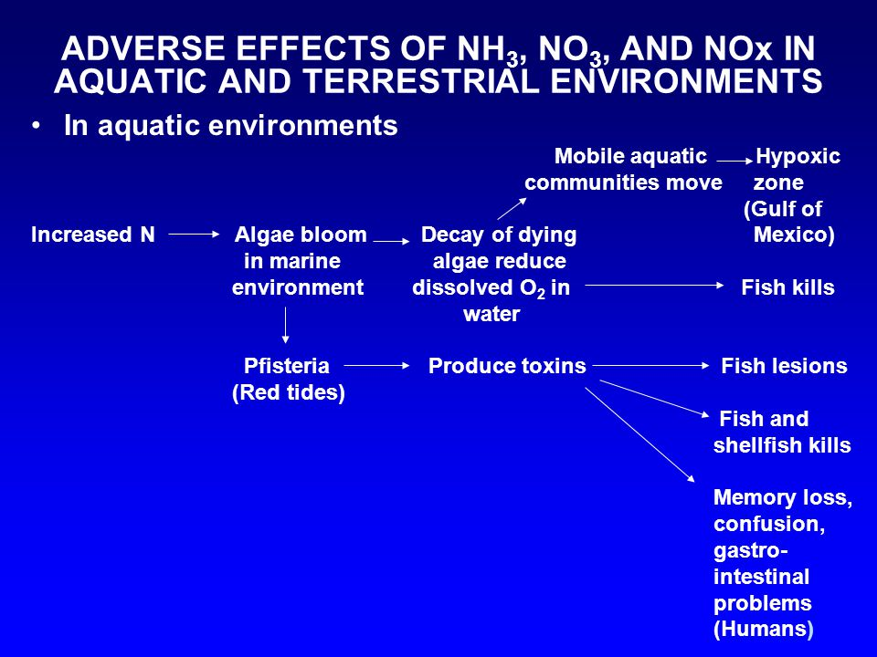 ADVERSE EFFECTS OF NH 3, NO 3, AND NOx IN AQUATIC AND TERRESTRIAL ENVIRONMENTS In aquatic environments Mobile aquatic Hypoxic communities move zone (Gulf of Increased N Algae bloom Decay of dying Mexico) in marine algae reduce environment dissolved O 2 in Fish kills water Pfisteria Produce toxins Fish lesions (Red tides) Fish and shellfish kills Memory loss, confusion, gastro- intestinal problems (Humans)