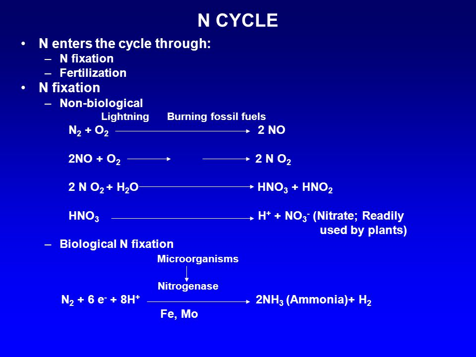 N CYCLE N enters the cycle through: –N fixation –Fertilization N fixation –Non-biological Lightning Burning fossil fuels N 2 + O 2 2 NO 2NO + O 2 2 N O 2 2 N O 2 + H 2 O HNO 3 + HNO 2 HNO 3 H + + NO 3 - (Nitrate; Readily used by plants) –Biological N fixation Microorganisms Nitrogenase N 2 + 6 e - + 8H + 2NH 3 (Ammonia)+ H 2 Fe, Mo