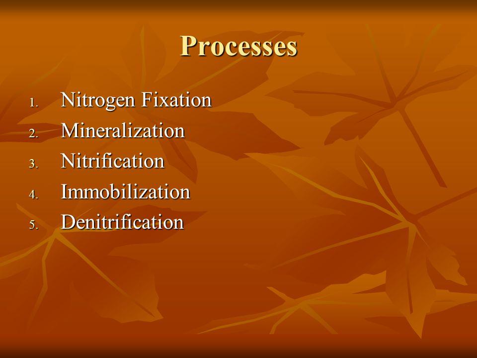 Processes 1. Nitrogen Fixation 2. Mineralization 3.