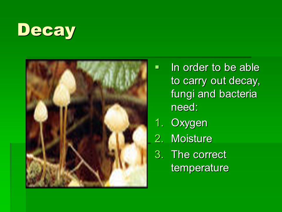 Decay  In order to be able to carry out decay, fungi and bacteria need: 1.Oxygen 2.Moisture 3.The correct temperature
