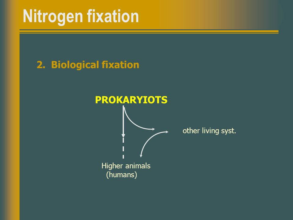 Nitrogen fixation 2.Biological fixation PROKARYIOTS other living syst. Higher animals (humans)