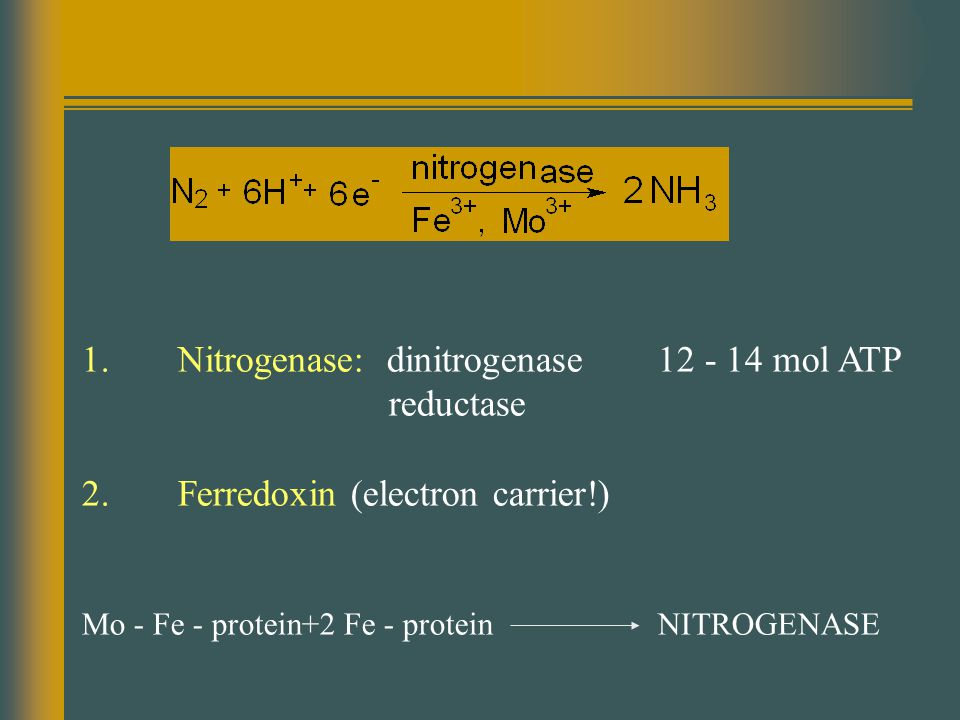 1. Nitrogenase: dinitrogenase12 - 14 mol ATP reductase 2.Ferredoxin (electron carrier!) Mo - Fe - protein+2 Fe - protein NITROGENASE