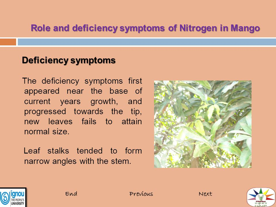 Deficiency symptoms Deficiency symptoms The deficiency symptoms first appeared near the base of current years growth, and progressed towards the tip,