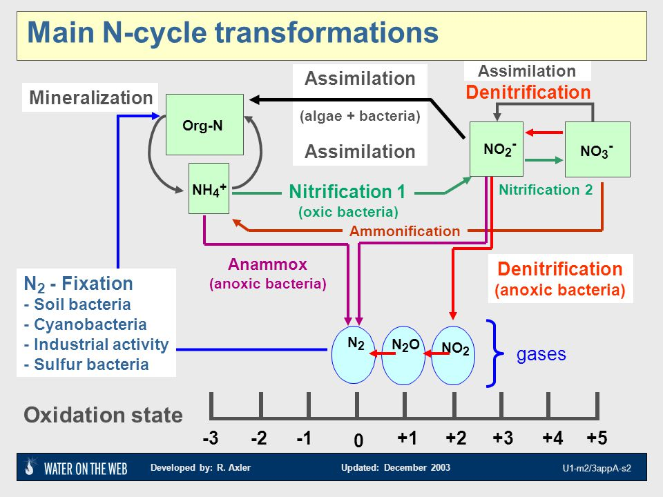 Developed by: R. Axler Updated: December 2003 U1-m2/3appA-s2 Assimilation (algae + bacteria) Assimilation -3+5+4+3+2+1 0 -2 Oxidation state Assimilati