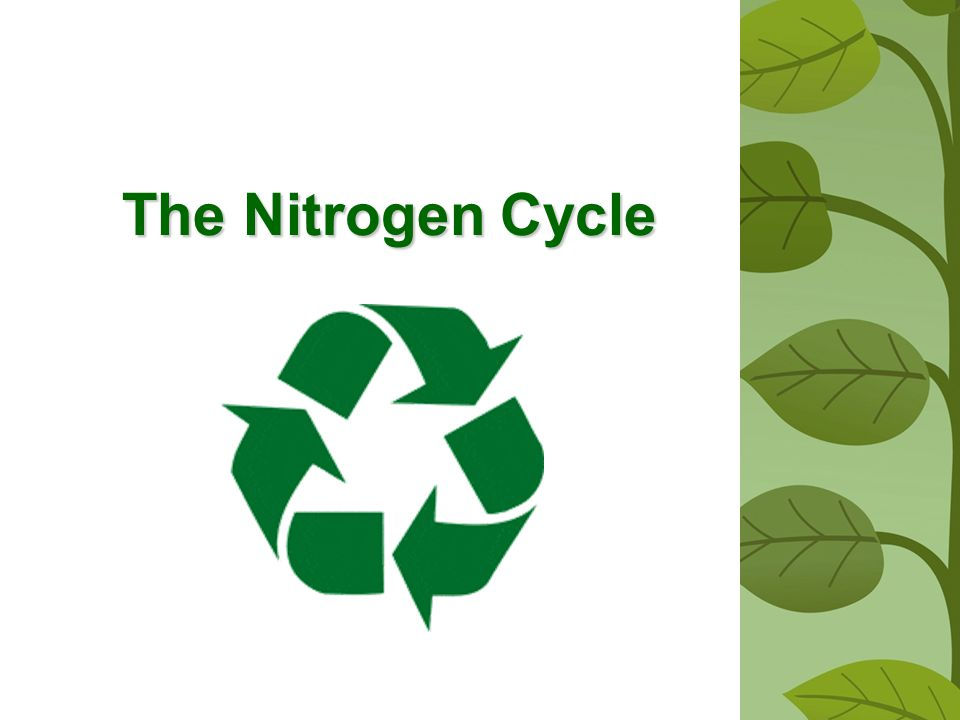 8.Some farmers alternate crops that require rich supplies of nitrogen, such as corn, with alfalfa.