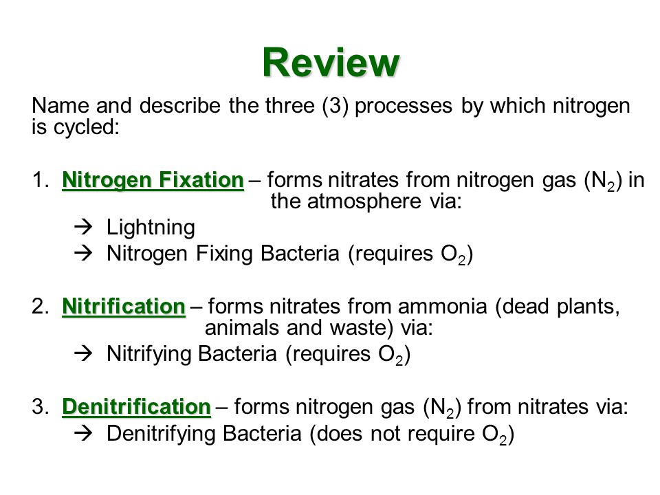 Review Name and describe the three (3) processes by which nitrogen is cycled: Nitrogen Fixation 1. Nitrogen Fixation – forms nitrates from nitrogen ga