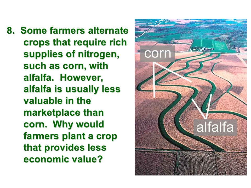 8. Some farmers alternate crops that require rich supplies of nitrogen, such as corn, with alfalfa. However, alfalfa is usually less valuable in the m