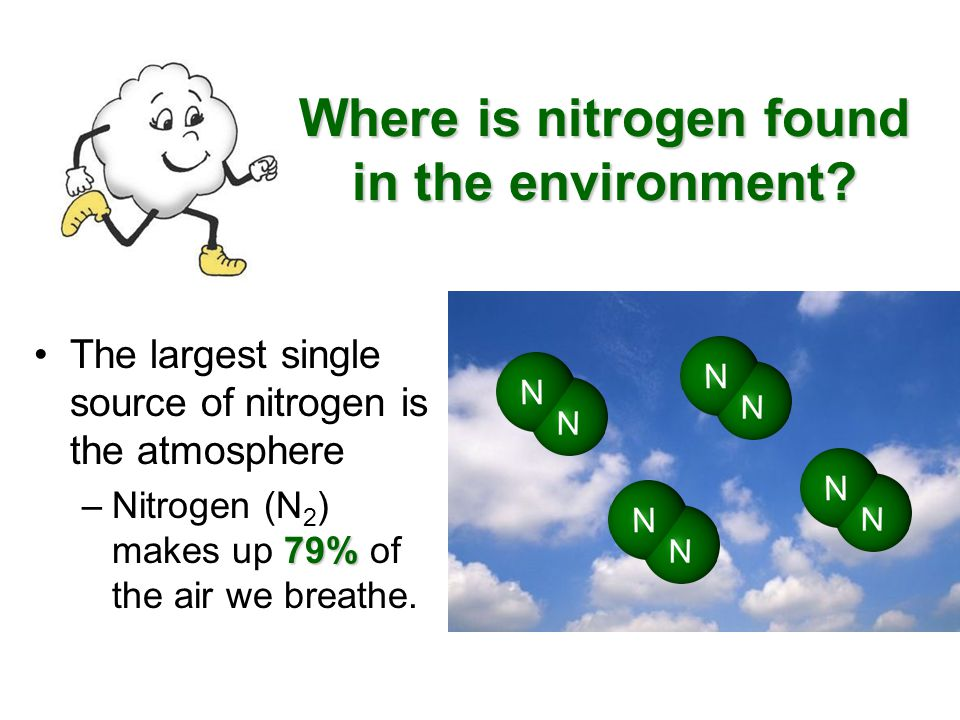 Where is nitrogen found in the environment? The largest single source of nitrogen is the atmosphere 79% –Nitrogen (N 2 ) makes up 79% of the air we br