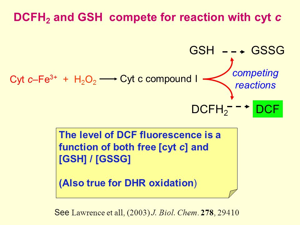 DCFH 2 and GSH compete for reaction with cyt c Cyt c–Fe 3+ + H 2 O 2 GSH DCFH 2 DCF competing reactions The level of DCF fluorescence is a function of both free [cyt c] and [GSH] / [GSSG] (Also true for DHR oxidation) Cyt c compound I GSSG See Lawrence et all, (2003) J.