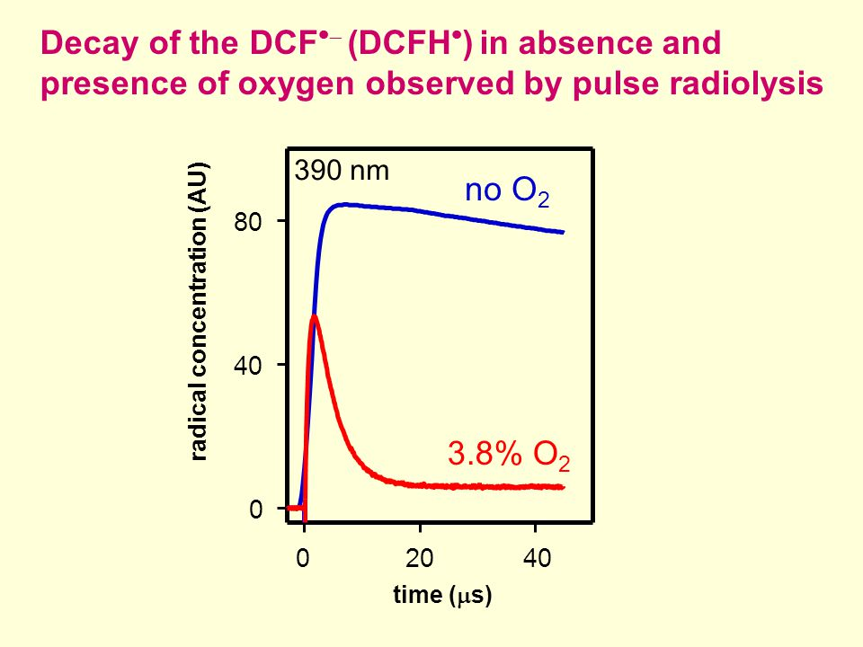 0 40 80 0 20 40 no O 2 3.8% O 2 Decay of the DCF   (DCFH  ) in absence and presence of oxygen observed by pulse radiolysis radical concentration (AU) time (  s) 390 nm