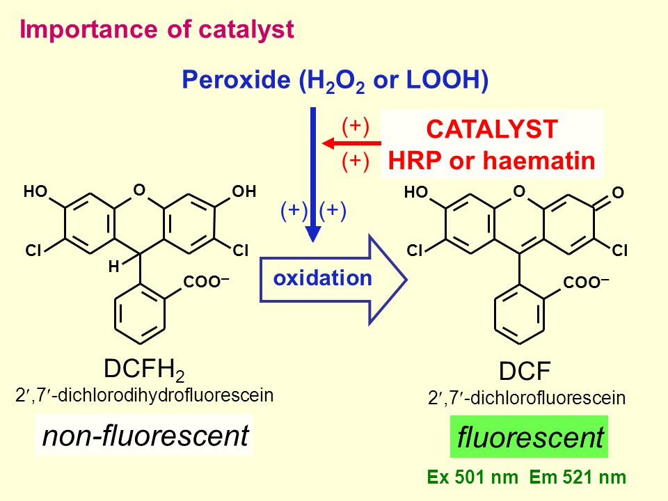 DCFH 2 2,7-dichlorodihydrofluorescein non-fluorescent DCF 2,7-dichlorofluorescein fluorescent Peroxide (H 2 O 2 or LOOH) oxidation Importance of catalyst O Cl OH Cl H COO ─ HO O COO ─ Cl HO O Ex 501 nm Em 521 nm (+) CATALYST HRP or haematin (+)
