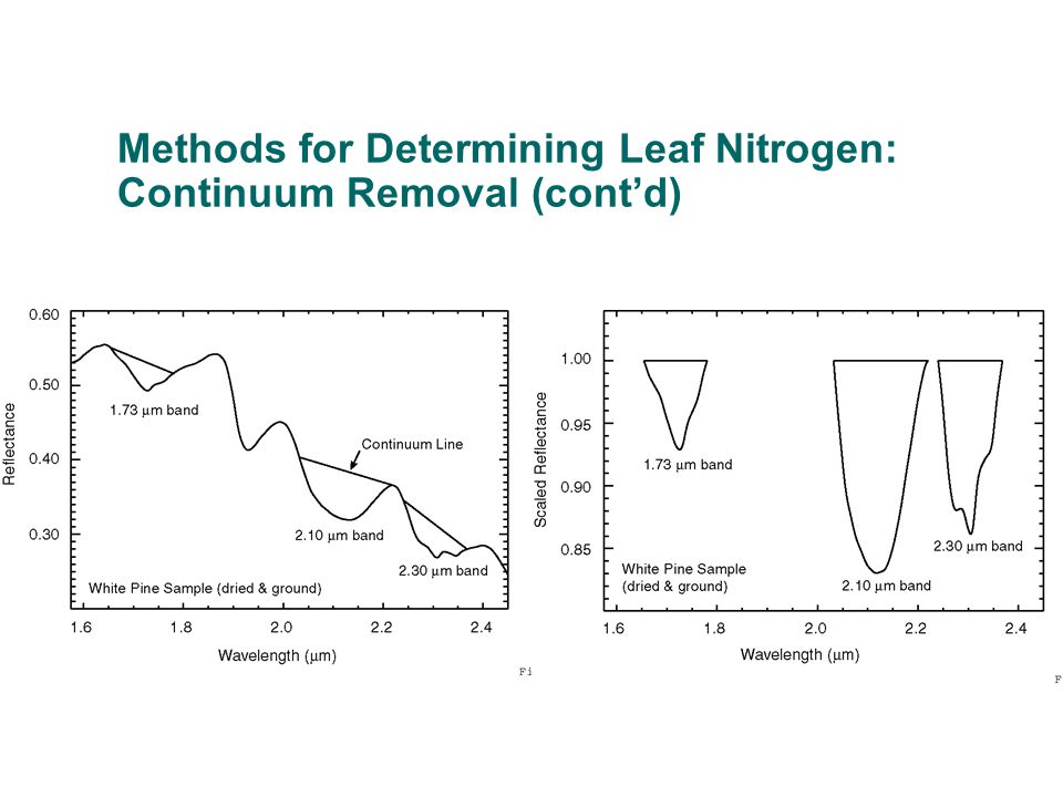 Methods for Determining Leaf Nitrogen: Continuum Removal (cont'd)
